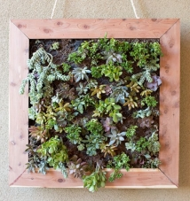 http://blog.homedepot.com/diy-vertical-succulent-garden-tutorial/